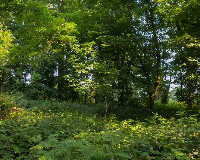 Environemnt and forestry at Gaddesden | Hertfordshire